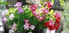 เหล่าบรรดาดอกไม้ประดับตกแต่งบ้าน